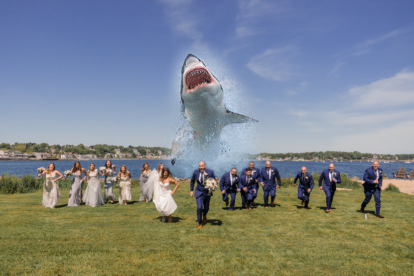 Wedding shark